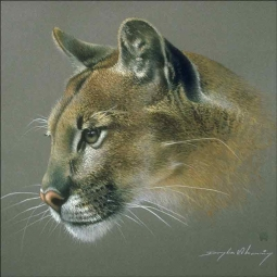 Cougar Study by Douglas Manning Ceramic Accent & Decor Tile 319013AT