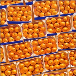Clementines by Beaman Cole Ceramic Tile Mural - BCA011