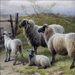 Sheep and Lambs by Charles Jones Ceramic Accent & Decor Tile CJ2005AT