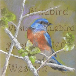 Western Bluebird by Debbie Hughbanks Ceramic Tile Mural - DHA075AT