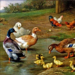 Chickens, Ducks and Ducklings Paddling by Edgar Hunt Ceramic Accent & Decor Tile EH015AT