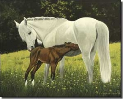 "Ryan Horses Equine Ceramic Accent Tile 10"" x 8"" - EWH-LMR010AT"