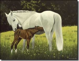 "Ryan Horses Equine Ceramic Accent Tile 8"" x 6"" - EWH-LMR010AT"