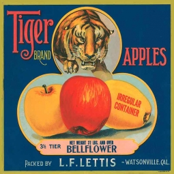 Tiger Apples Ceramic Accent & Decor Tile FCL055AT