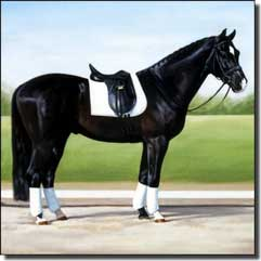 "Crawford Dressage Horse Ceramic Accent Tile 12"" x 12"" - JCA006AT"