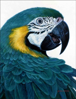 Macaw by Jack White Ceramic Accent & Decor Tile - JWA011AT