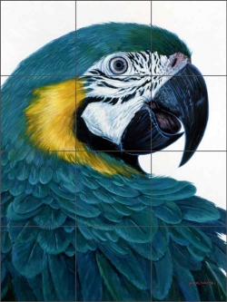 Macaw by Jack White Ceramic Tile Mural - JWA011