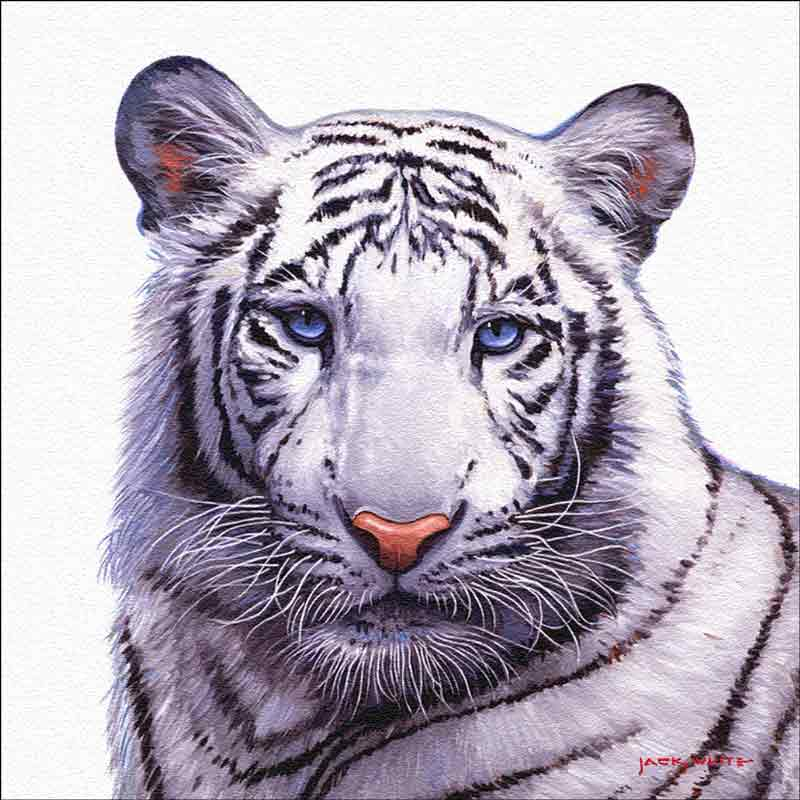 Siberian Tiger by Jack White Floor Tile Accent Mural JWA021