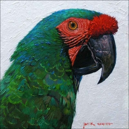 Green Parrot by Jack White Ceramic Accent & Decor Tile - JWA030AT