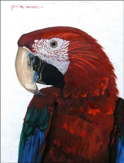Red Parrot by Jack White Ceramic Accent & Decor Tile
