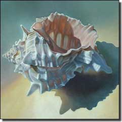 "Macon Conch Seashell Ceramic Accent Tile 4.25"" x 4.25"" - LMA040AT"