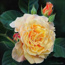 Rose Study I by Leslie Macon Ceramic Accent & Decor Tile - LMA064AT