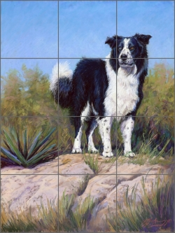 McDonald Border Collie Dog Ceramic Tile Mural - MMA011