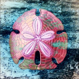 Sand Dollar by Agata & Hector Ceramic Accent & Decor Tile OB-AGA37AT