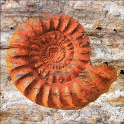 Sea Fossil by Agata & Hector Ceramic Accent & Decor Tile OB-AGA38AT
