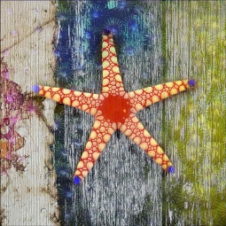 Starfish 1 by Agata & Hector Ceramic Accent & Decor Tile OB-AGA41AT