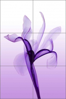 Iris by Hong Pham Ceramic Tile Mural - OB-HP08