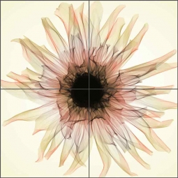 Dahlia III - sepia by Hong Pham Ceramic Tile Mural OB-HP12c