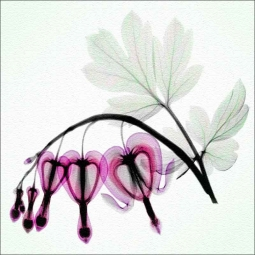 Bleeding Heart - Square by Hong Pham Glass Accent & Decor Tile - OB-HP25aAT