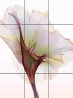 Gladiolus by Hong Pham Ceramic Tile Mural - OB-HP34