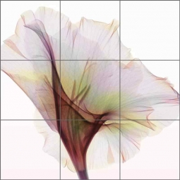 Gladiolus - Square by Hong Pham Ceramic Tile Mural - OB-HP34b