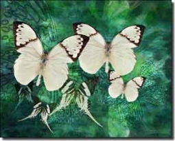 "Bradshaw Butterfly Ceramic Accent Tile 10"" x 8"" - OB-MB23AT"