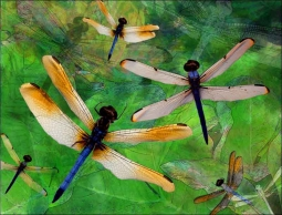 Dragonfly Fantasy by Melinda Bradshaw Ceramic Accent & Decor Tile - OB-MB25AT