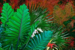 Tropical Leaves II by Melinda Bradshaw Accent & Decor Tile OB-MB32bAT