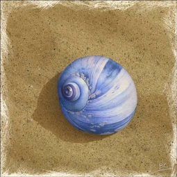 Blue Shell on Brown Beach by Brian Cody Ceramic Accent & Decor Tile - POV-BCA001AT