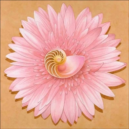 Chambered Nautilus & Pink Flower by Brian Cody Ceramic Accent & Decor Tile - POV-BCA002AT