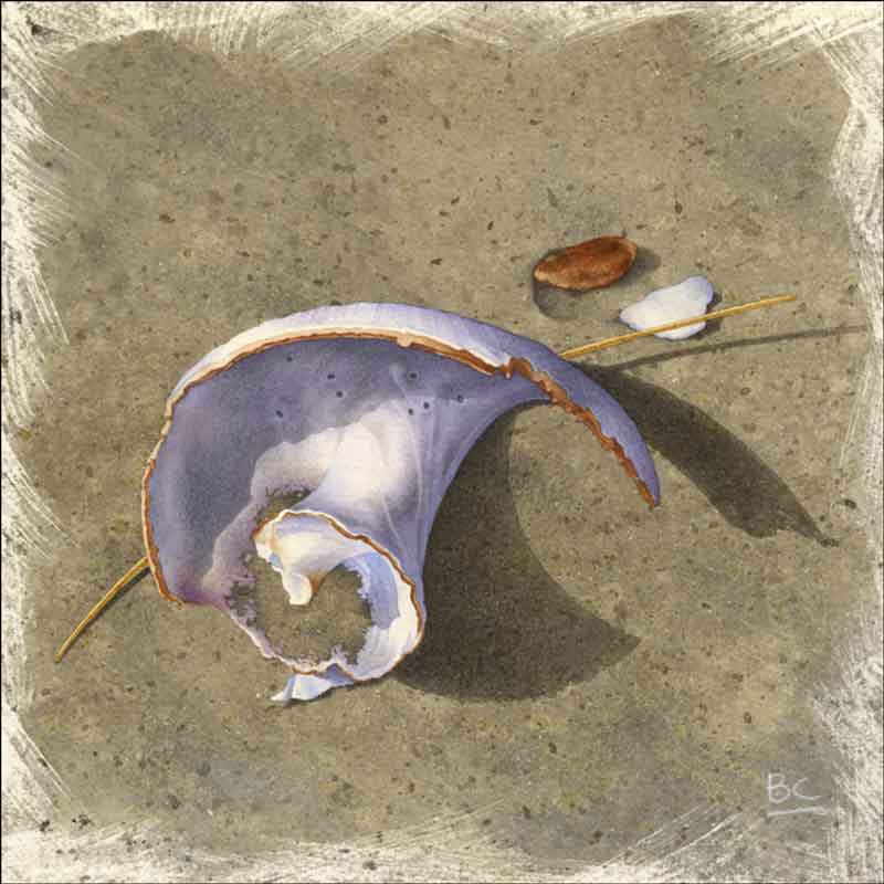Steep Hill Beach - Worn Shell by Brian Cody Ceramic Accent & Decor Tile - POV-BCA007AT