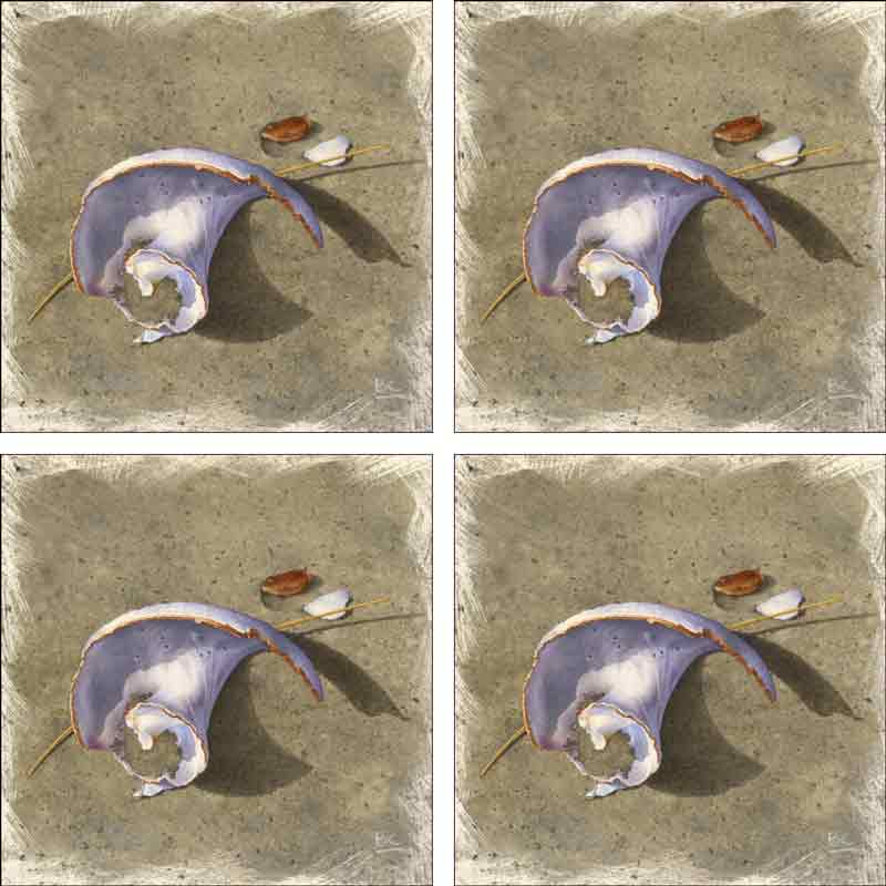 Steep Hill Beach - Worn Shell by Brian Cody Ceramic Accent & Decor Tile Set - POV-BCA007AT