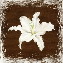 Brown Lily by Brian Cody Ceramic Accent & Decor Tile - POV-BCA010AT