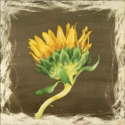 Sunflower Drying by Brian Cody Ceramic Accent & Decor Tile - POV-BCA012AT