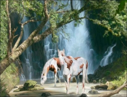 Appaloosa Falls by Jeff Wilkie Ceramic Accent & Decor Tile - POV-JWA005AT