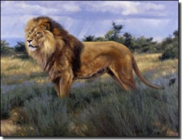 "Aldrich Lion Animal Ceramic Accent Tile 8"" x 6"" - RW-EA002AT"