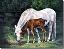 "Forget Horses Equine Ceramic Accent Tile 8"" x 6""  - RW-VFA009AT"