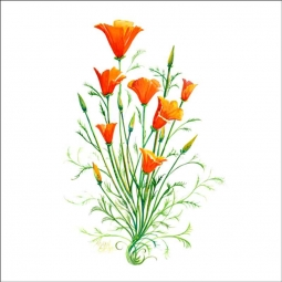 California Poppy by Susan Libby Ceramic Accent & Decor Tile - SLA042AT