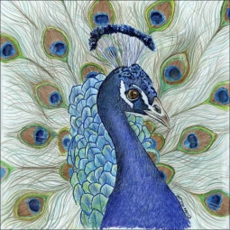 Peacock by Sara Mullen Ceramic Accent & Decor Tile - SM043AT
