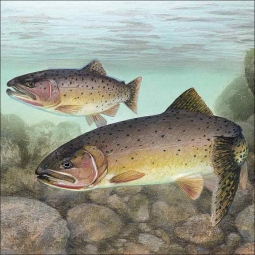 Cutthroat Trout by Tim Knepp Ceramic Accent & Decor Tile - TKA003AT