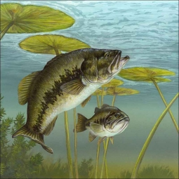 Largemouth Bass by Tim Knepp Ceramic Accent & Decor Tile - TKA005AT