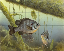 Redear Sunfish by Tim Knepp Ceramic Tile Mural - TKA009