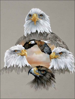 Eagles Rule by Verdayle Forget Ceramic Accent & Decor Tile - VFA032AT